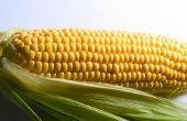 Hoe om te verwarmen bevroren maïs op de kolf