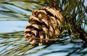 Pine Cone Craft projectideeën