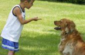 Hoe op te lossen een keten-Link Fence, zodat een hond het niet zal springen