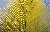 Hoe maak je een schuilplaats van palmbladeren