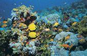 Hoor vis onder water?