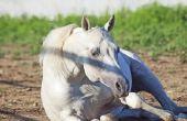 Hoe maak je een paard Sling