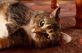 Zelfgemaakte kat Urine Neutralizer