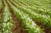 Soorten landbouw belastingvrijstellingen