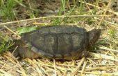 Hoe vrij te geven een magnetisch schildpad in het Wild
