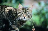 Smaakversterkers voor katten