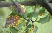 Biologisch Fungicide opties