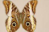 How to Get Rid van vlinders en zonder ze aan te raken