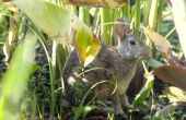Hoe een konijn uit uw tuin te houden