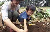 Kinder aanwijzingen voor de teelt van een wijnstok van zoete aardappel