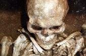 Forensische archeoloog salaris