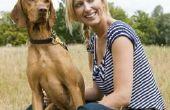Hoe een hond met zwakke achterkant benen Massage
