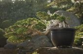 Potgrond bodems voor een Bonsai