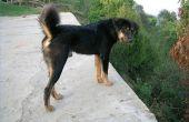 Over natuurlijke hond afweermiddel (repellant)