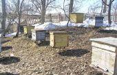 Hoe te bouwen van de Bee-Hives & Stichting Frames