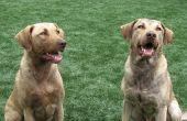 Anti-inbeslagneming medicijnen voor honden
