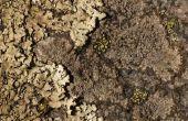 Hoe te verwijderen van de schimmel uit zandsteen