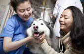 Vestibulaire ziekte bij honden