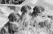 Moeten honden bezoeken met strooisel Mates?