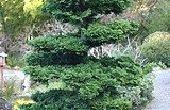 Soorten van groenblijvende bomen