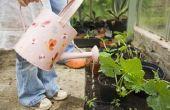 How to Build een eenvoudige achtertuin kas