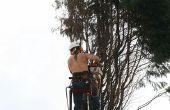 Apparatuur voor snijden bomen