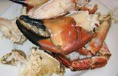 Hoe u kunt opwarmen Stone Crab Claws