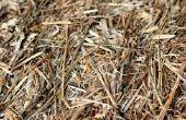 Het gebruik van hooi aan controle onkruid in een moestuin
