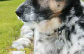 Huid problemen dat oorzaak buitensporige vergieten in een hond
