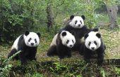 Wat kunnen We doen om te helpen bedreigde dieren?