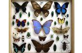 Hoe Bugs te behouden voor een Bug-collectie