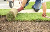 Hoe lang kan ik houden het gras gerold Up voordat ik leggen Sod?
