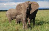 Lijst van bedreigde dieren in Zimbabwe