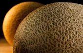 Hoe weet ik wanneer de meloen rijp Is