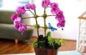 Een gewone winkel koopt orchidee omzetten in een spectaculaire regeling