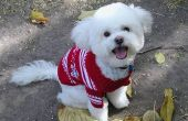 Tips voor het maken van een hond trui