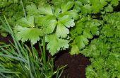 How to Grow uw eigen kruiden & specerijen