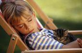 Informatie over katten voor Kids