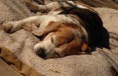 Prednison behandeling voor mestcel tumoren bij oudere honden