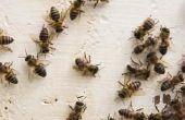 Hoe te houden van bijen uit te bouwen van een Nest