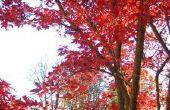 Hoe om te bladeren snel droog