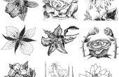 Bij het tekenen van verschillende soorten bloemen