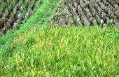 De voordelen van S Corp indienen voor boeren