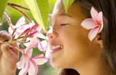 Het behouden van de bloemen van de Plumeria
