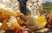 Hoe maak je een kip Feeder van PVC