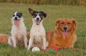 Giftige planten & kruiden voor honden
