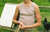 Correcte afhandeling van verse eieren van de boerderij