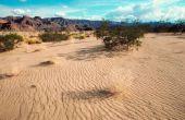 Lijst van bedreigde dieren in de woestijn