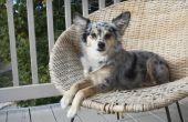 How to Get Rid van vlooien op honden met huismiddeltjes