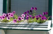 Wat bloemen is geschikt voor een plantenbak?